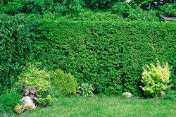 Как защитить растения от ветра.