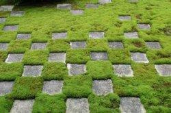 Почему появляется мох на газоне?