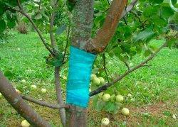 Лечение ран у дерева.